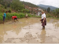 Photo: Field preparation for an SRI field in Bhutan.  [Photo courtesy of Kharma Lhendup, Bhutan, 2008]