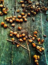 Photo: 044/366 - seeds