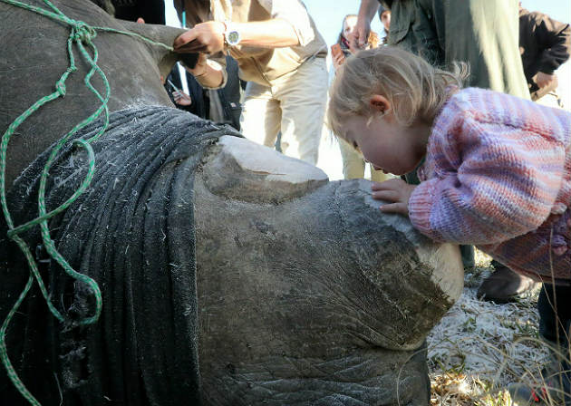 Little Ava Lester and her father, Chris Lester, at the dehorning of Bella the rhino which was performed by a vet team at Kragga Kamma Game Park earlier in June 2018.