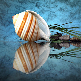 Seashell by Janette Ho - Artistic Objects Still Life