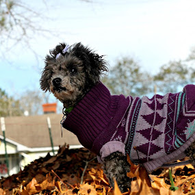 My Fuzzy sister my moms dog Columbia ann enjoying thanksgiving with her family Charles Oswald Joyce Elaine Reaves Oswald by Jessica Driver - Animals Other