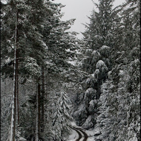 ForestPath by Alex Newstead - Landscapes Forests ( contrast, england, uk, park, snow, white, forest, monotone, hampshire, black )