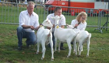 Photo: Rubriek 2: witte lammeren geboren tussen 09-03 en 23-04-2013.  1a. Janneke M17; 1b. Janneke B18; 1c. Netty.