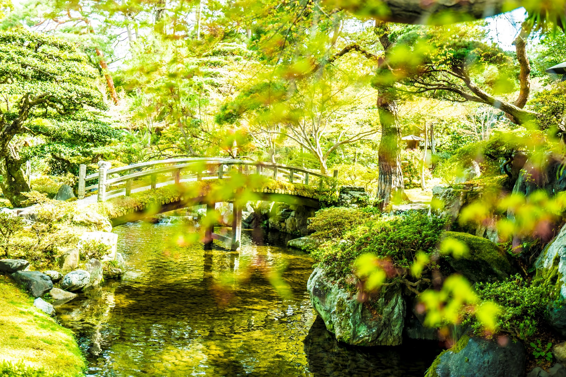 Kyoto Imperial Palace Oikeniwa4