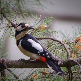 by Anngunn Dårflot - Animals Birds