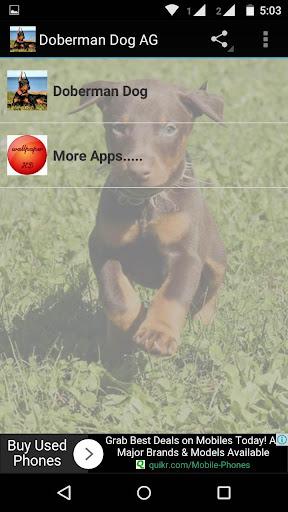 Doberman Dog Wallpaper HD