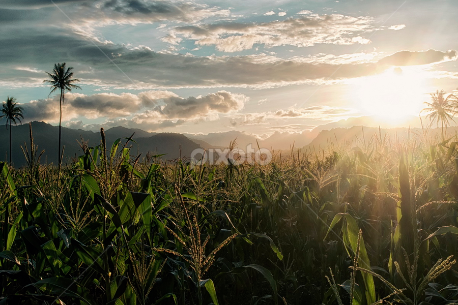 ladang jagung by Eed Gayo - Landscapes Sunsets & Sunrises