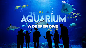 The Aquarium: A Deeper Dive thumbnail