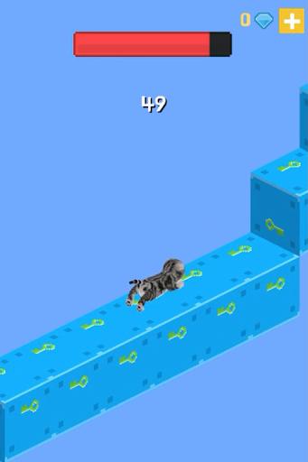 고양이의 무한한 계단
