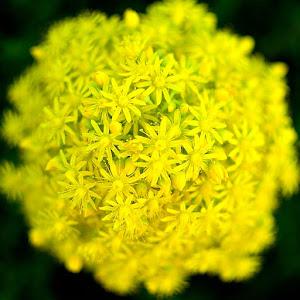Flowers_12.JPG