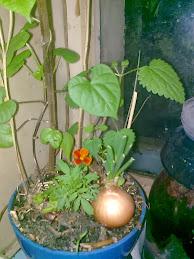 На окошке растения (зима-весна)