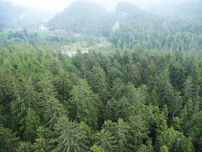 Photo: Sitka spruce stands (highest biomass on LiDAR maps)