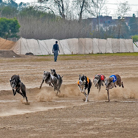 by Mohsin Raza - Animals - Dogs Running (  )