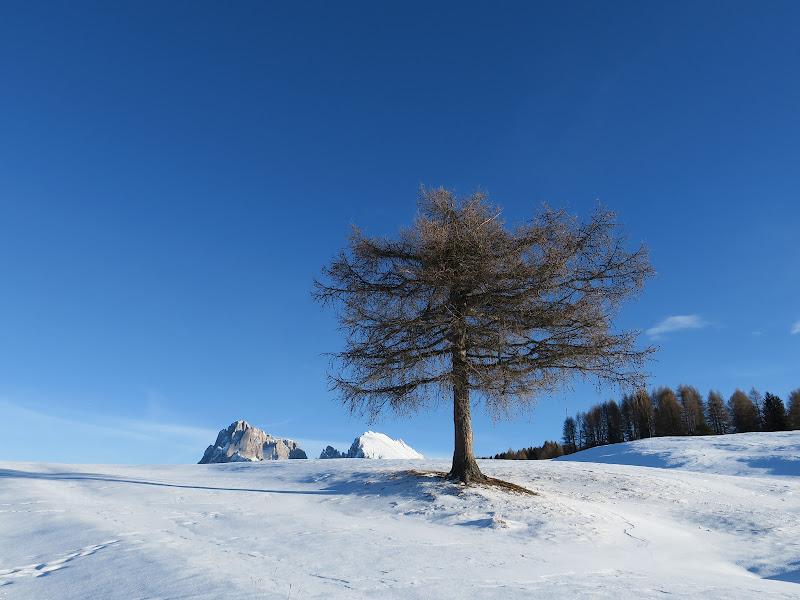Inverno solitario di klarinetto
