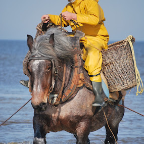 by Danny Vandeputte - Animals Horses
