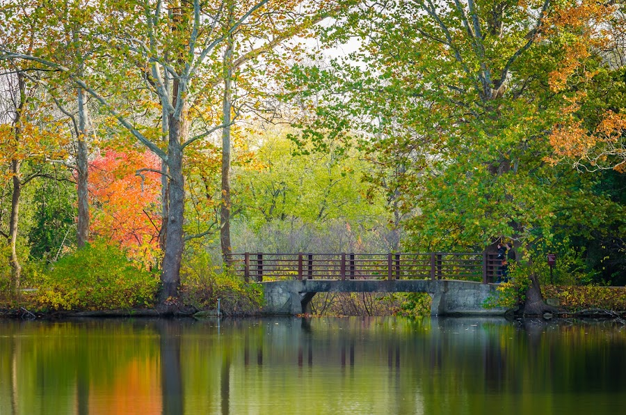 Bridging Beauty  by Lynn Kirchhoff - Landscapes Waterscapes ( reflection, autumn, morton arboretum, lake marmo, bridge, landscape,  )