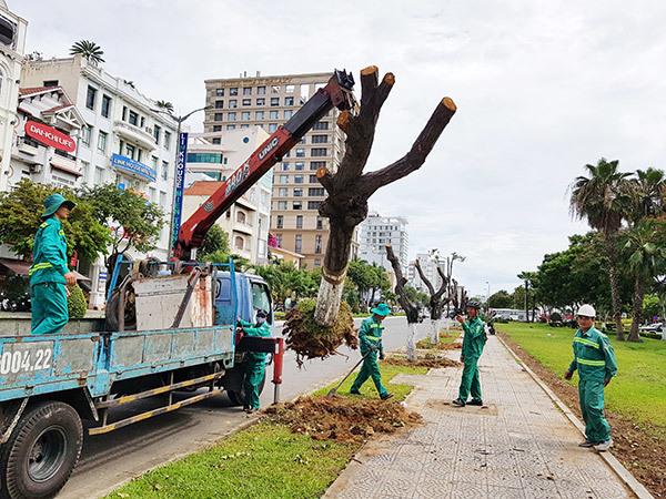 Có cần phải sử dụng dịch vụ di dời cây hay không?