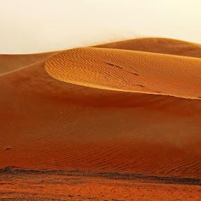 by Lealiza Seiler - Landscapes Deserts ( sands, desert, summer, middle east )