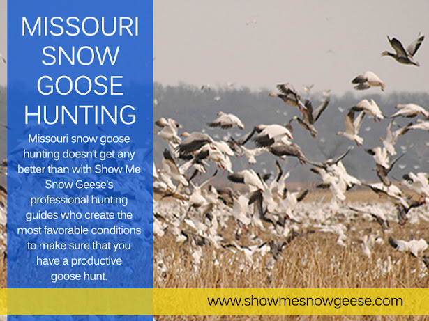 Missouri Snow Goose Hunting