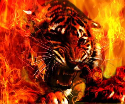Download Fire Tiger Live Wallpaper By Blue Star Team Apk Latest