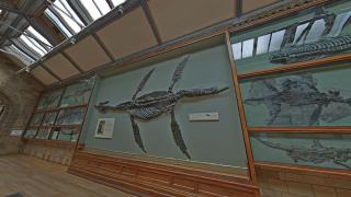 imagen de un dragón marino prehistórico