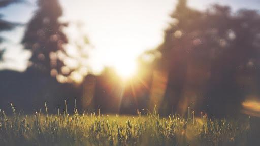 herbe-soleil