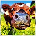 Cow Simulator 3D 2016 icon