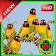 Love Bird (HD) Wallpaper for PC-Windows 7,8,10 and Mac