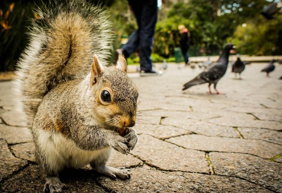 Photogenic Squirrel  by Ravi Patel - Animals Other Mammals ( squirrel )