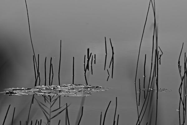 passeggiata in una riserva naturale di marmiria