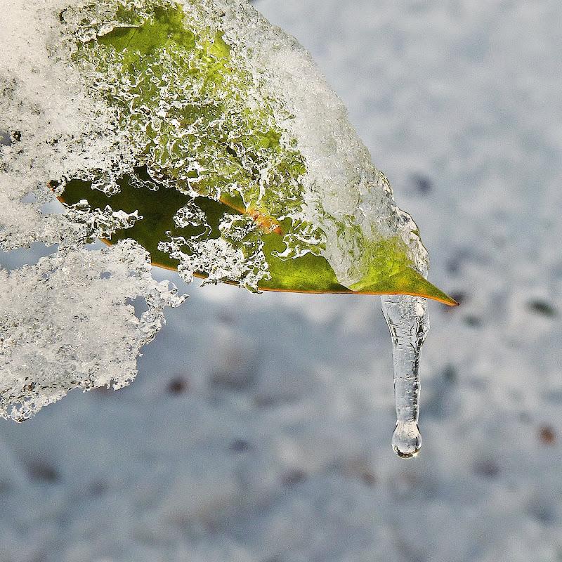 Disgelo di Justinawind