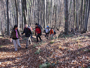 Photo: evo nas u šumi
