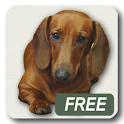 Dachshund sad song Free icon