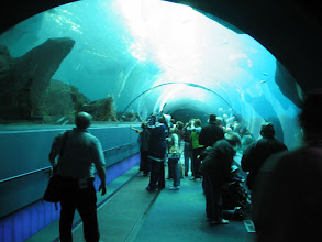 Photo: Awesome walk-under section of this fantastic aquarium!