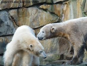 Photo: Hm, sollte Knut sie mal in den Po zwicken ?