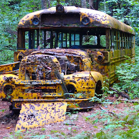 Yellow Bus by Deegee English - Transportation Other ( bus, metal, green, trail, trees, yellow, woods, abandoned,  )