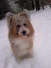 Photo: 2,5 Stunden toller Spaziergang durch den Schnee