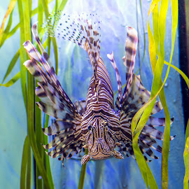 by Carol Bidwell - Animals Fish