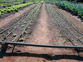 Photo: Irrigação por gotejamento