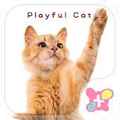 icon & wallpaper-Playful Cat-