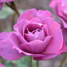 by Terry Oviatt - Flowers Flower Gardens