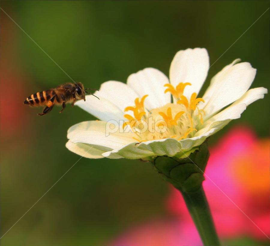 by DODY KUSUMA  - Nature Up Close Flowers - 2011-2013
