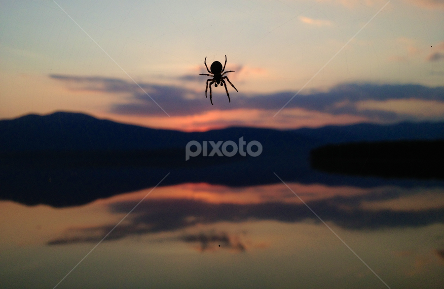 Still Life Arachne by Eric Eldritch - Novices Only Objects & Still Life ( nature, spiritual, sunset, pagan, spider,  )