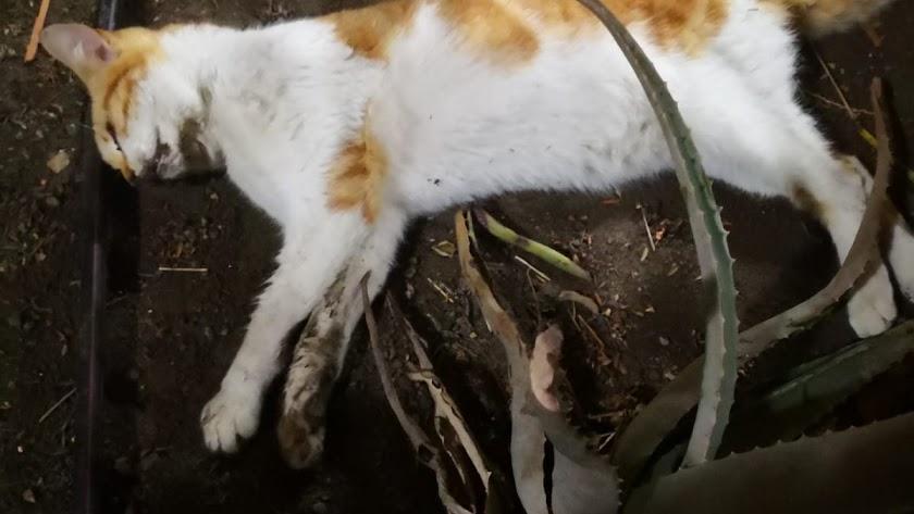 Uno de los gatos fallecidos recientemente.