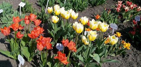 Photo: F4233109 w Ogrodzie Botanicznym