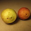 Villosa Fig