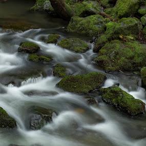 Muir Creek by George Nichols - Nature Up Close Water (  )