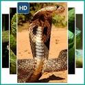 Live Snake Wallpaper icon
