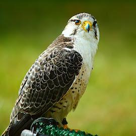 What ? by Gérard CHATENET - Animals Birds