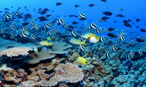 Deep Sea Wallpapers
